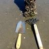 ホンビノス貝のモヤ抜きと塩抜きの所感
