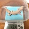 体重測定【2018年8月】