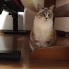 【週末】で一筆(いっぴつ) ~ラーメン、猫
