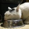 彷徨猫マロ子ちゃんの防ダニ対策~2020first