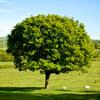 改めてWorkflowyはツリー型思考タイプの私にとって最高のツールだと感じた!