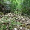 ナガモッコク尾根から赤子谷西尾根のハイキング(その4)赤子谷右俣前半