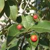 赤い実のなる季節