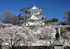 桜の名所 大垣城