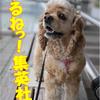 【期間限定公開】海賊王に俺はなるっ!(ワンピース)