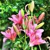 季節の花(令和三年六月1 )