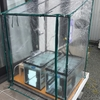 60cm水槽稚魚飼育