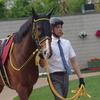 阪神芝1400m(2歳戦)種牡馬別ランキング