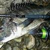 尾鷲 熊野で釣り始め 1月のヒラスズキとアカハタ調査