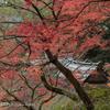 オヤジの紅葉写真 大興善寺