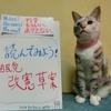 本日のポスター(2016年7月19日)