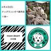 あと少しで 4月4日(日) 埼玉県 春日部市 ドッグランいそべ販売会 開催します