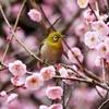 好きな「春」について語る【花と鳥編】