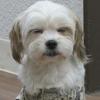 3月オープン!保護犬カフェ立川店
