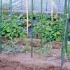 トマト補植