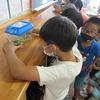 3年生:理科 昆虫の体のつくり