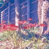 【フィルム カメラ】Konica HEXAR×エクタクロームE100【フィルム カメラ 現像】【フィルム カメラ 使い方】