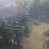 ミモザ・ガーデンの日記 雨と霧の一日