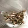 土筆(つくし)の煮物/Boiled horsetail