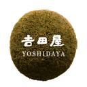 Yoi Yoi Blog