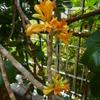 久しぶりに花をみました「ウシタエ」