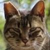 地域猫の写真の展示会が大丸であるみたいで、湊川神社のぬっこぬこの写真応募してみます。