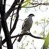 札幌・豊平公園 野鳥60種類が生息