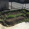 緑肥の反省。ご利用は計画的に。