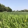 夏日の石神井公園