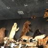 子供と博物館へ 大哺乳類展