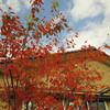 まっかな秋と、今日のオヤツと夕ごはん
