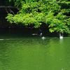 夏のため池