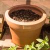 苗ポッドに種を撒きました(家庭菜園の様子)
