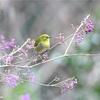 明治神宮探鳥会のかわいい野鳥たち!