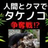 十和利山の事件はなぜ起きたのか? タケノコをとりあうツキノワグマと人間。