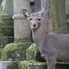 久しぶりに奈良へ。