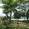 ダッシュでもまわりきれないシンガポール動物園【シンガポール旅行#9】