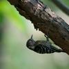 最近の鳥撮影