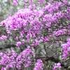 桜じゃないけどお花見♪