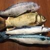 【きもかわいい】リアルなお魚ぬいぐるみ4点セットを買ったよ!【ネコの大喜び】