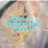 たにログ150 【考察】多肉は蒸れに弱いってホント?意外と丈夫な多肉たち