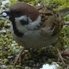 南部蝉しぐれ と 雀のフアミリー