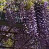 麻溝公園の花!(2021年4月25日)