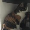 【愛猫日記】毎日アンヌさん#14