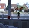 十色に素敵なオランダ