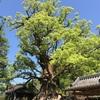 新緑パワー蒲生八幡神社