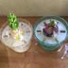 4-314   愛すべき花たち〜ヒヤシンス、順調かな!?〜
