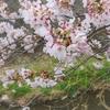 光琳を知ろう!⑥なぜ世界で日本美術といえば光琳なのか。