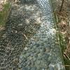 シンガポール植物園 木漏れ日の道
