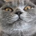 アサリちゃんは猫である